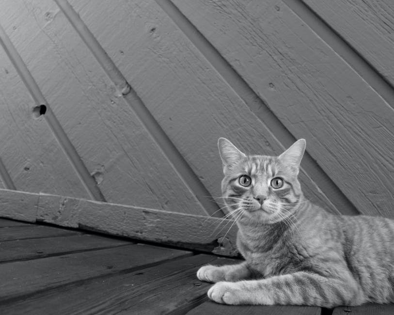 A cat sitting on top of a wooden bench